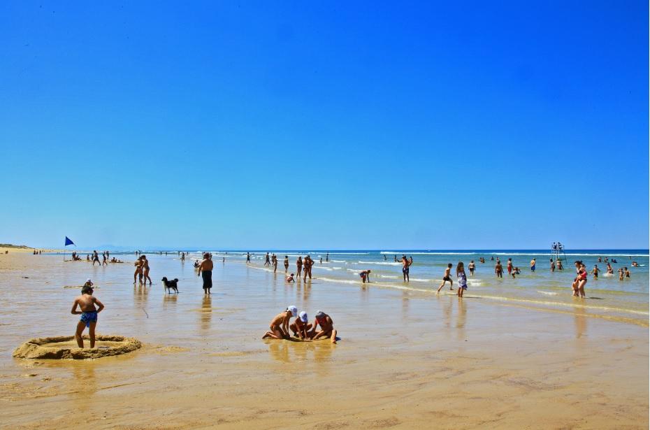 plage surveillee chiens acceptés messanges landes